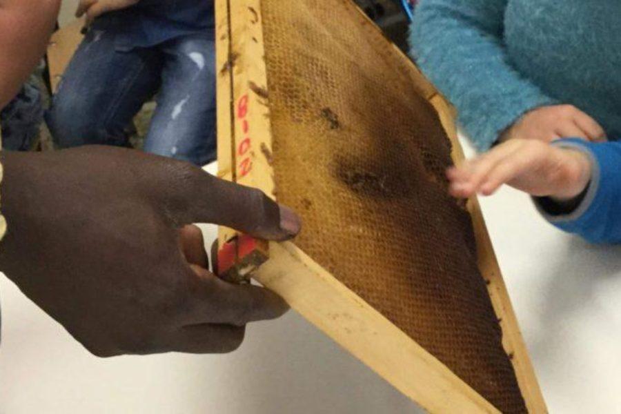 Conoscere l'integrazione attraverso le api. Bee My Job incontra le scuole