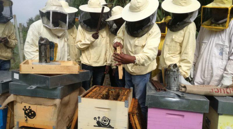 A scuola di pappa reale con Bee My Job, grazie a Intesa Sanpaolo