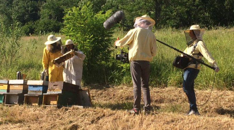 Bee My Job: una storia da raccontare
