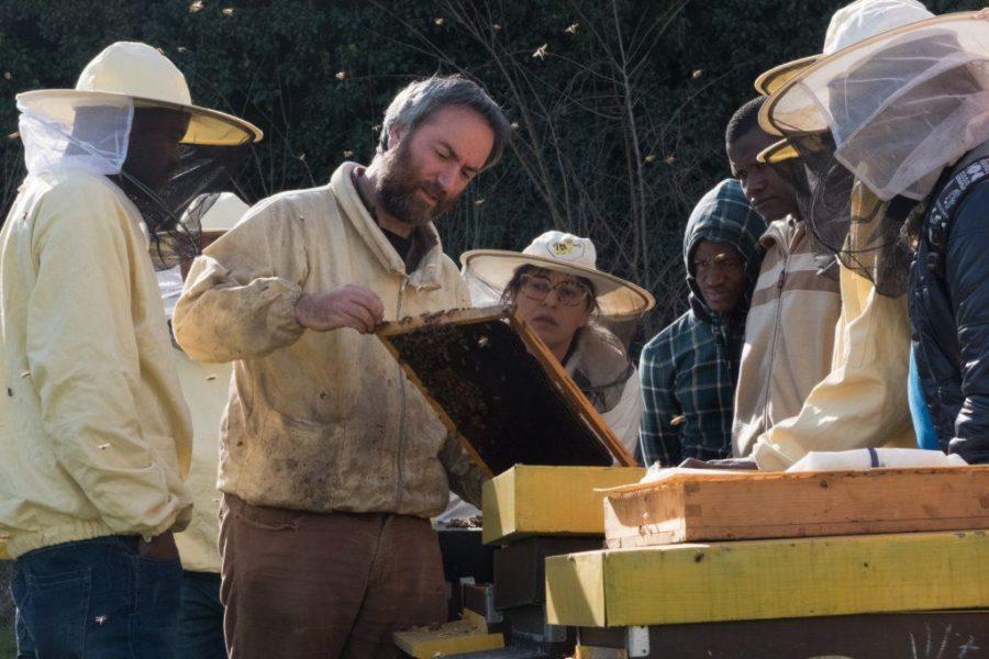 Bee My Job 2.0: attivati 24 nuovi tirocini