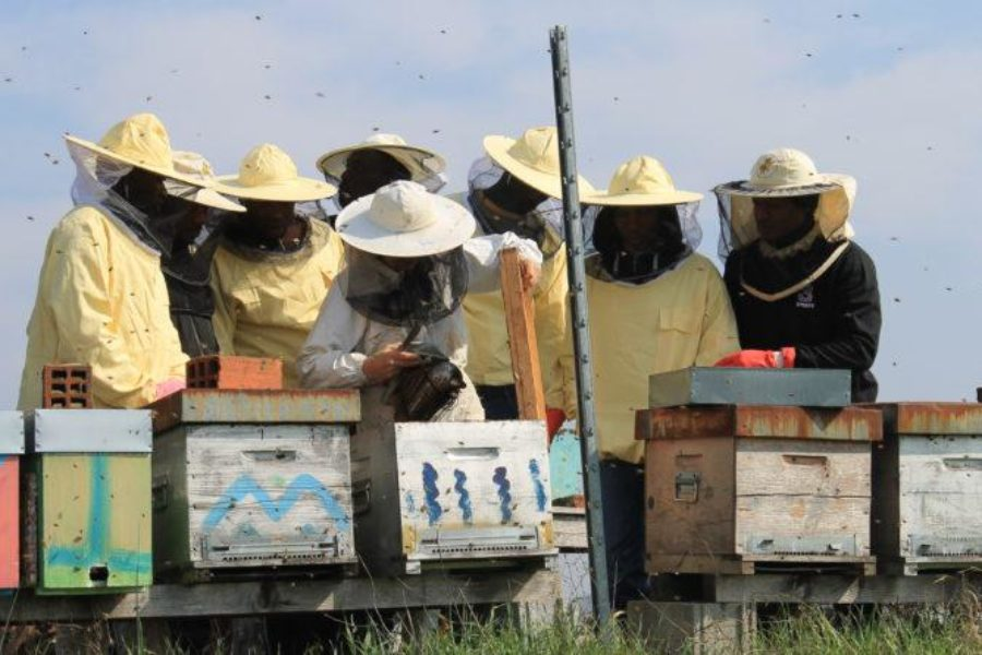 Bee My Job, i primi successi