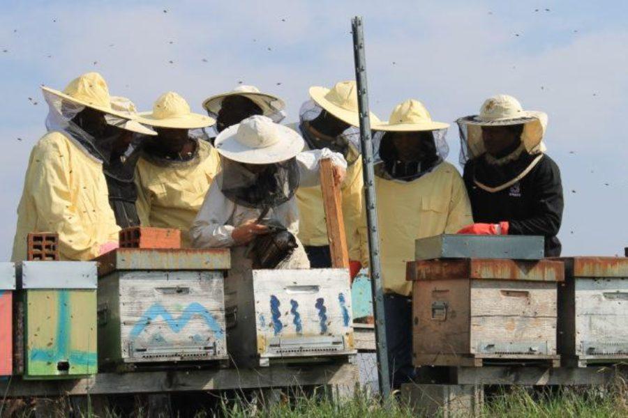 Bee My Job, i primi successi