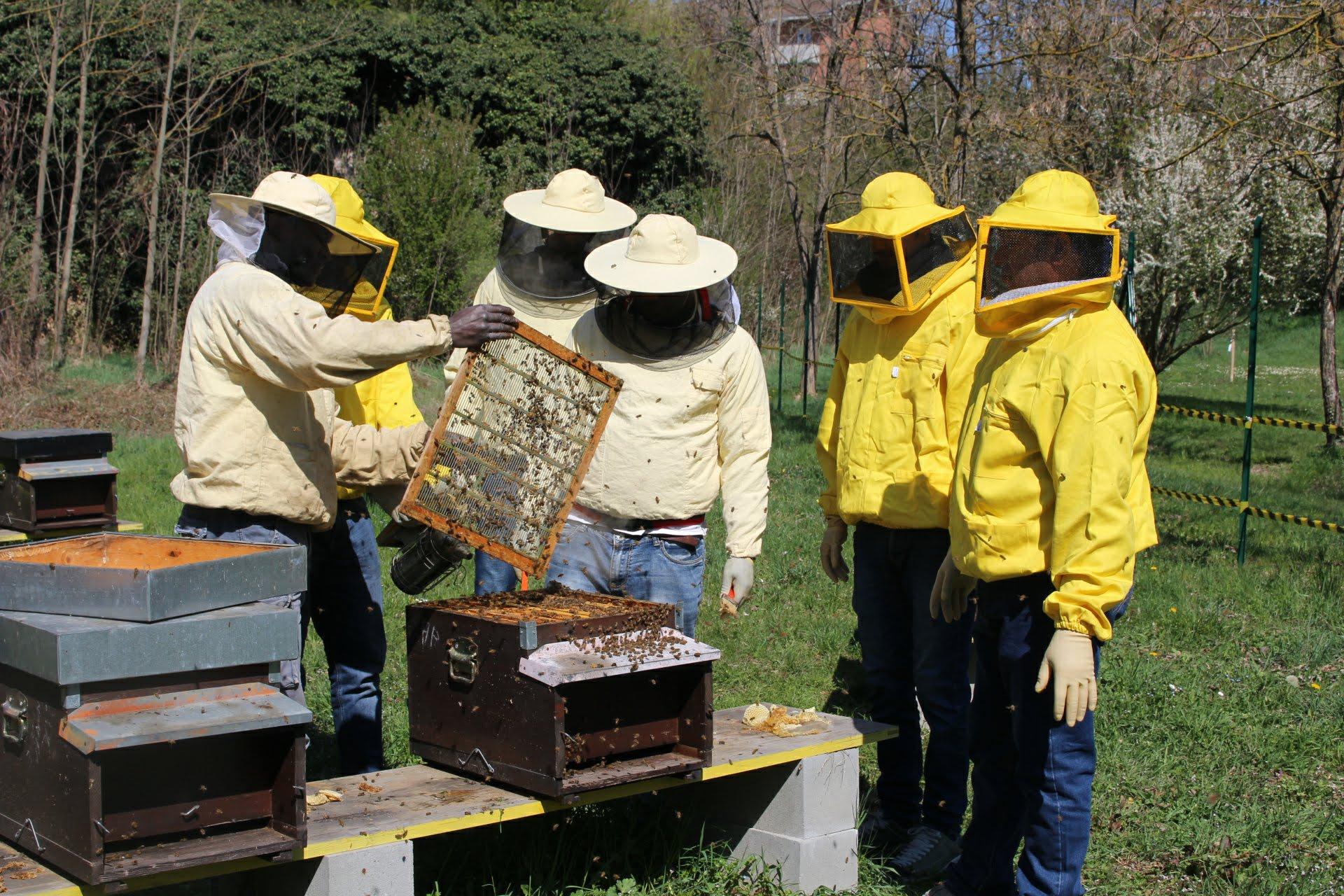 Bee My Job lancia l'Academy ad Alessandria per formare apicoltori tra rifugiati e richiedenti asilo di tutta Italia