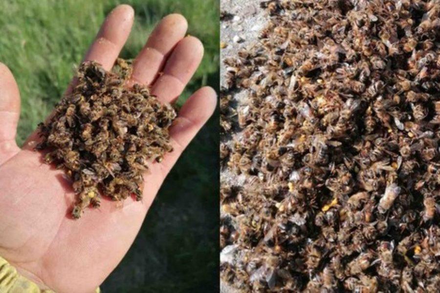 Salviamo le api, salviamo l'ambiente! Scrivi al tuo Comune